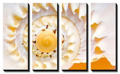 Sea Shell Abst No.4