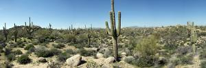 Arizona Desert, Panorama by Shan Shui
