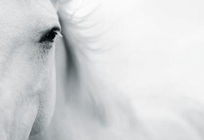 Caballo Blanco II by Shana Rae