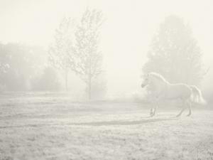 Niebla Blanco by Shana Rae