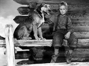 Shane, Brandon De Wilde, 1953
