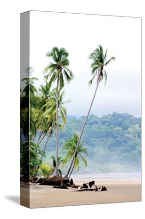 Costa Rica Palms by Shane Settle