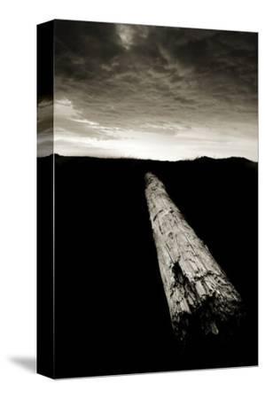 Dead Log at Floras Lake by Shane Settle
