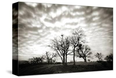 Emigrant Lake Trees by Shane Settle
