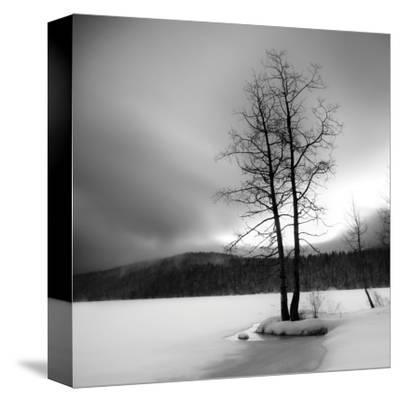 Lake of Woods Tree I by Shane Settle