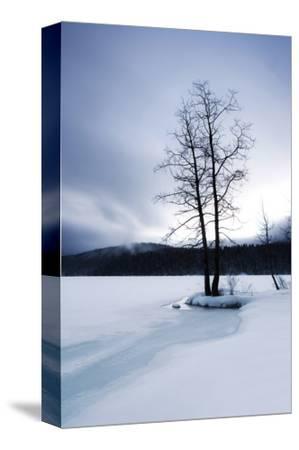 Lake of Woods Tree II by Shane Settle