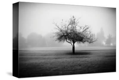 Playground Tree by Shane Settle
