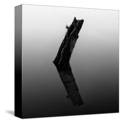 Stump in Hyatt Lake by Shane Settle