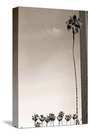 Tall Palm by Shane Settle