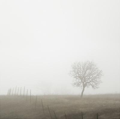 Tree and Fence II by Shane Settle