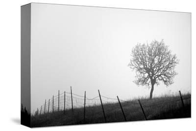 Tree and Fence III by Shane Settle