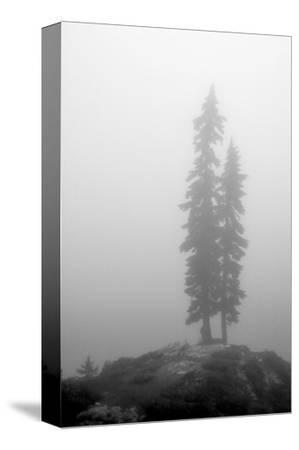 Two Trees on Mount Washington by Shane Settle