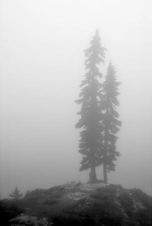 Two Trees on Mount Washington