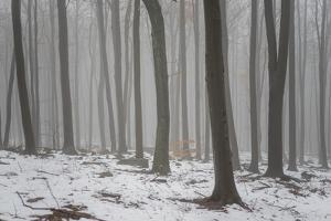 Forest in the Mist at Thaw Sleza Mount Landscaped Park by Shapencolour