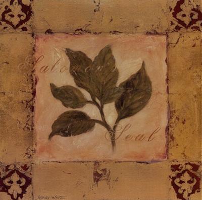 Solomon's Seal by Shari White