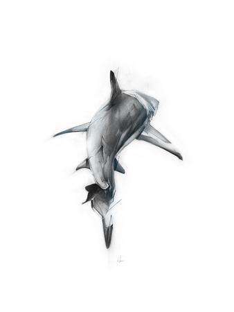 https://imgc.allpostersimages.com/img/posters/shark-3_u-L-PW4LAN0.jpg?p=0
