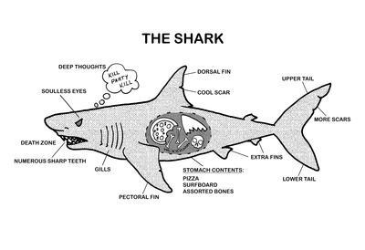 Anatomy of the shark