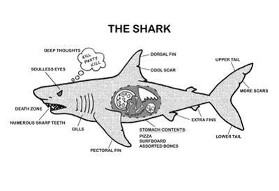 Shark Anatomy Diagram