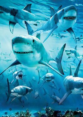Shark Infested