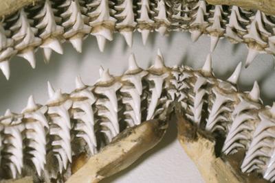 Shark Teeth and Jaws