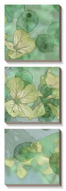 Mint Progeny II by Sharon Chandler