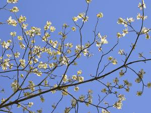 Petals & Sky I by Sharon Chandler