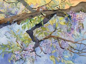 Wisteria, Van Vleck by Sharon Pitts