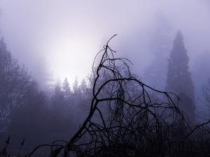 Foggy Day with Trees by Sharon Wish