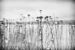 Wild Flowers by Sharon Wish