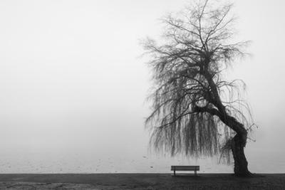 Winter Scene with Lake and Park Bench by Sharon Wish