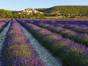 France, Provence, Banon, Lavender to Foreground by Shaun Egan