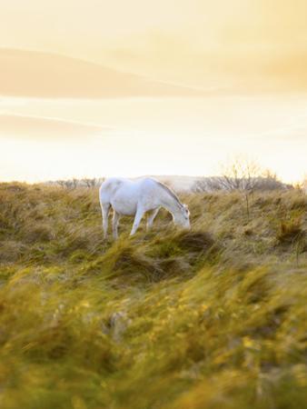 Ireland, Co.Donegal, Fanad, Horse in field by Shaun Egan