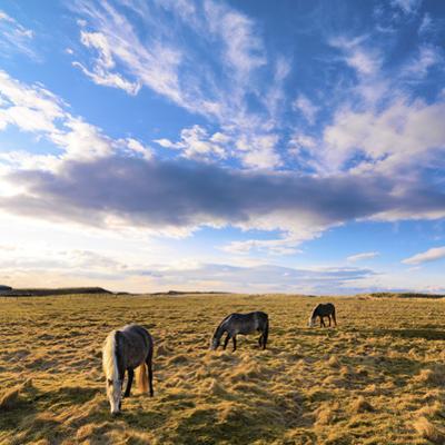 Ireland, Co.Donegal, Fanad, Horses in field by Shaun Egan