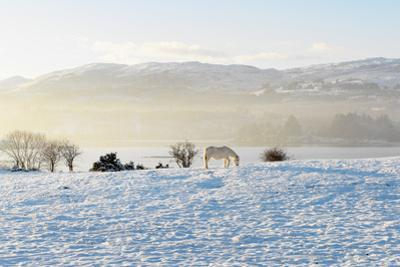 Ireland, Co.Donegal, Milford, snow covered landscape by Shaun Egan