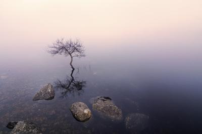 Ireland, Co.Donegal, tree reflected in Lough Dunlewey by Shaun Egan