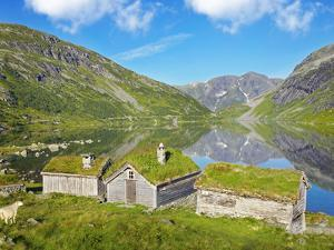 Norway, Western Fjords, Sogn Og Fjordane, Sheep Infront of Traditional Cottages by Lake by Shaun Egan