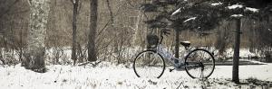 Bike on Snowy Trail in Hokkaido University Forest by Shayne Hill