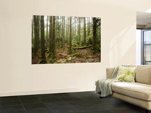 Forest Along Arakawa Trail to Jomon Sugui (Giant Tree) by Shayne Hill