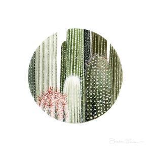 Circular Cacti by Shealeen Louise