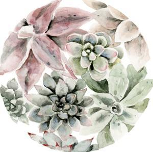 Circular Succulents by Shealeen Louise