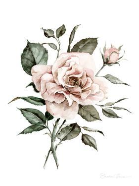 Faded Pink Rose by Shealeen Louise