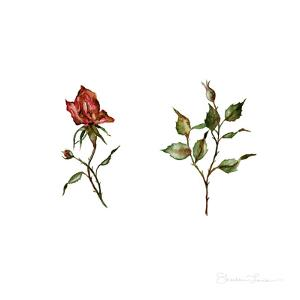Loose Rose Buds by Shealeen Louise
