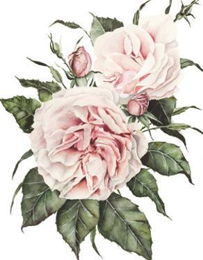 Pink Garden Roses by Shealeen Louise