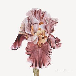 Pink Iris by Shealeen Louise