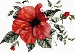 Red Hibiscus by Shealeen Louise