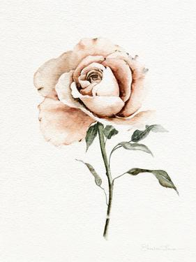 Single Peach Rose by Shealeen Louise