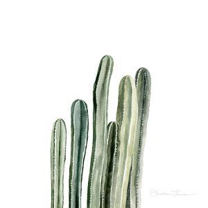 Tall Cacti by Shealeen Louise