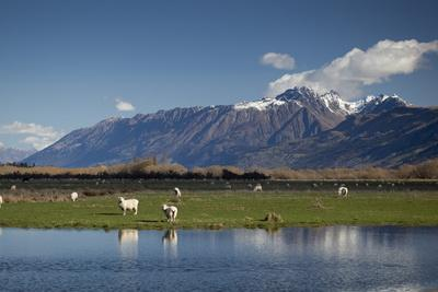 https://imgc.allpostersimages.com/img/posters/sheep-in-dart-river-valley-glenorchy-queenstown-south-island-new-zealand-pacific_u-L-PQ8QIZ0.jpg?p=0