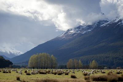 https://imgc.allpostersimages.com/img/posters/sheep-in-dart-river-valley-glenorchy-queenstown-south-island-new-zealand-pacific_u-L-PQ8QJB0.jpg?p=0
