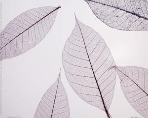 Sheer Leaves I